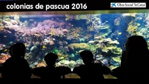 pascua2016